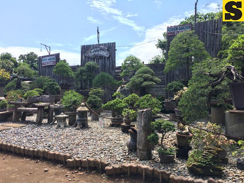 Bonsai Hidden Garden of Vigan