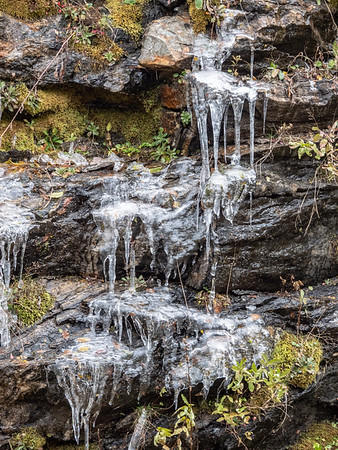 Early fall icicles