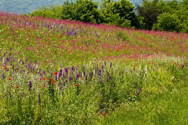 Smoky Mountain wildflowers