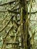 Heavy moss