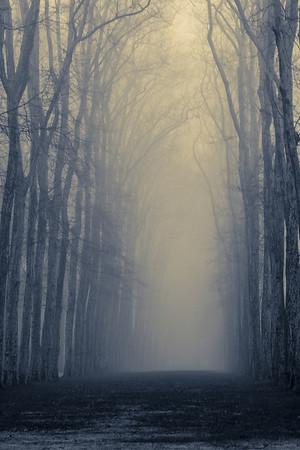 Foggy in Versailles
