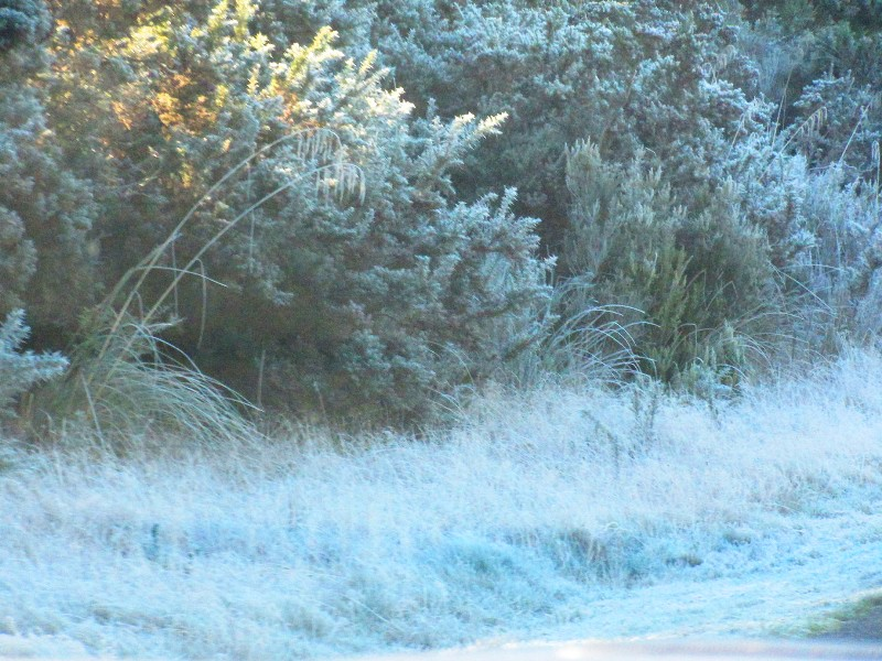 Frost on bushes and grass
