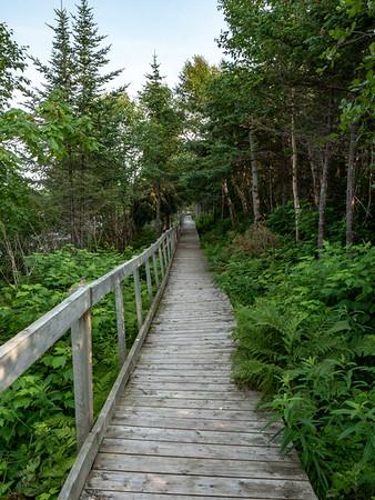Trail boardwalk