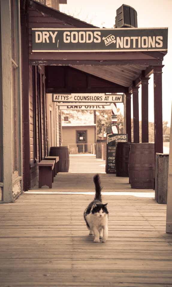 Old Cowtown Cat