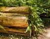 Fallen trunk garden