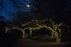Full moon over the Desert Botanic Gardens