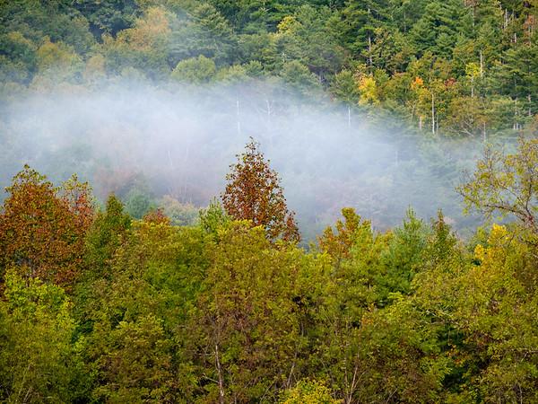 Foggy fall foliage