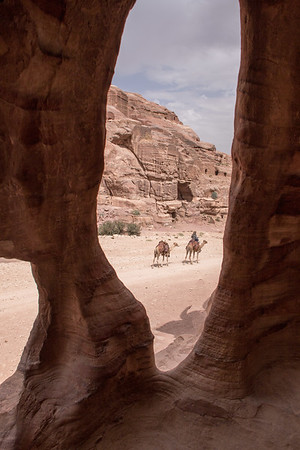 View of camels