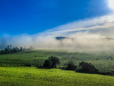 Cheshire Fog