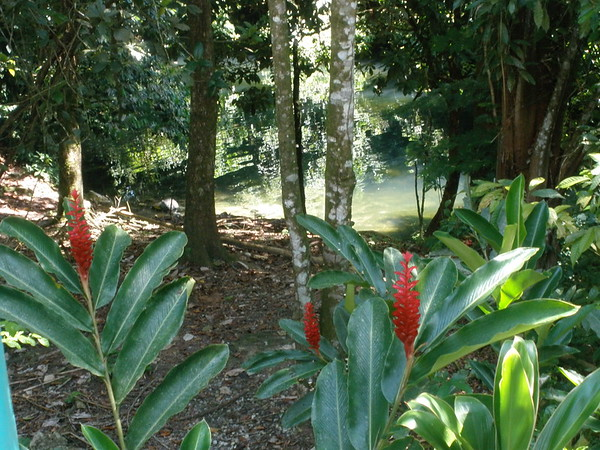 Red Ginger in Guatemala