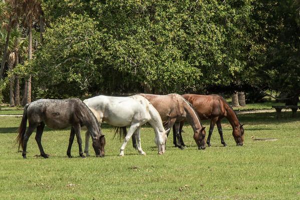 Cumberland horse quartet
