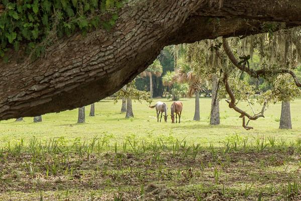 View through the trees