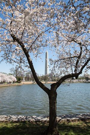 View through the cherry tree
