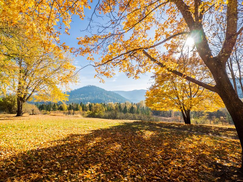 Fall Colors in Cataldo 2