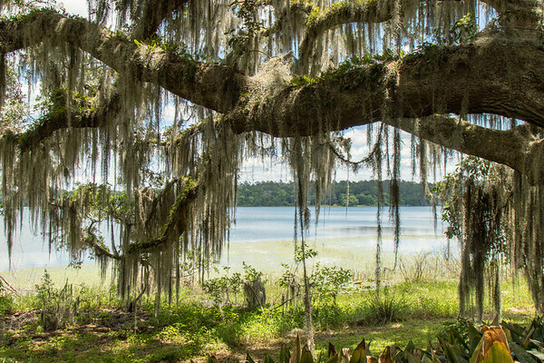 Lake view through the live oaks