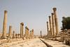 Cardo columns