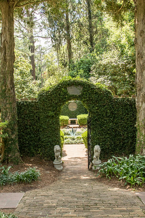 Ivy- covered garden entrance