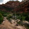 Dead Tree, Zion NP