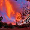 Davis, California, USA