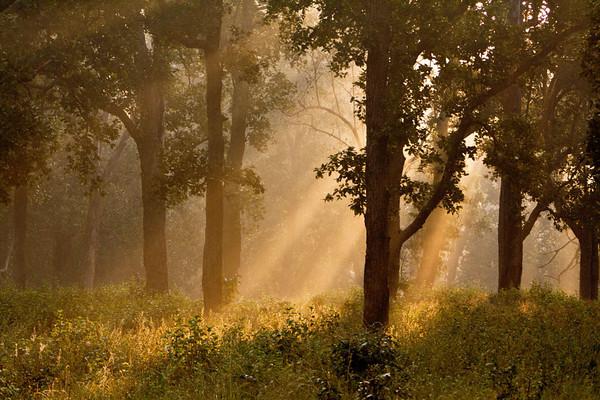 Morning light at Kahna NP