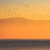Vogelschwarm am Morgen • Sonnenaufgang am Gardasee