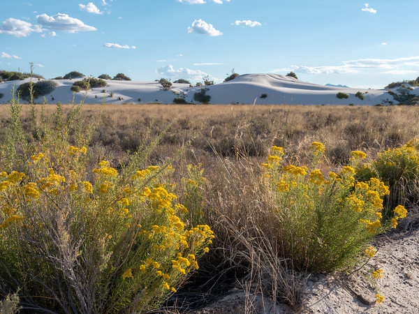 Blooms at White Sands