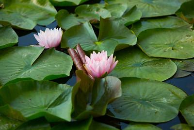 A pond in Lawrence, KS