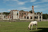 Horse at the ruins