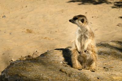 Zoo Payri Daiza