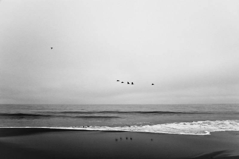 Pelicans over Limantour Beach.  They are quite graceful in flight.