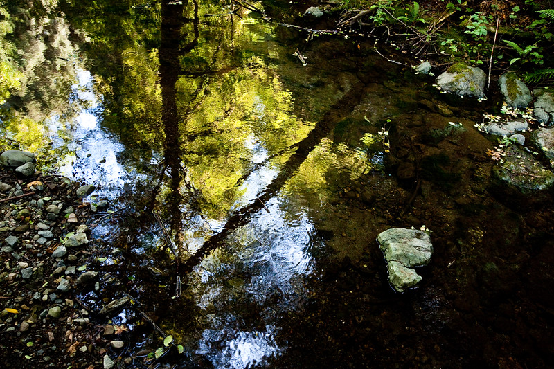Muir Woods reflection.