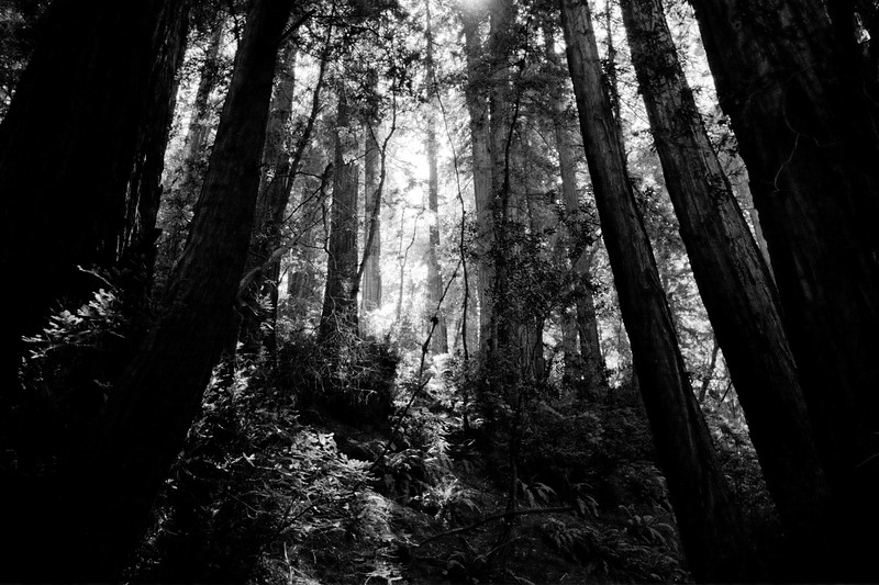 One of my favorite redwoods photo.