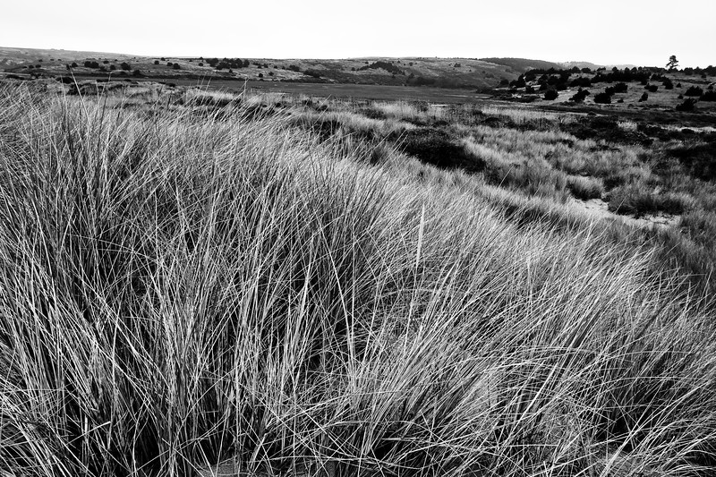 The views from on the dunes behind Limantour Beach.