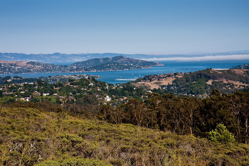 View of Sausalito in the distance.