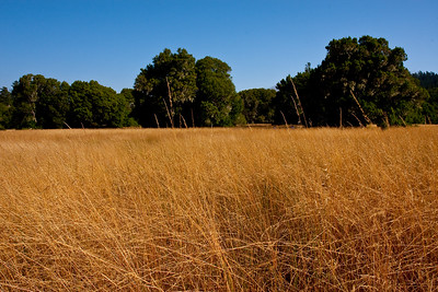 "This type of scene with tall, gold-colored grasses always reminds me of ""The Gladiator."""
