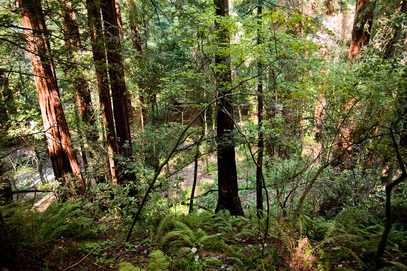 "We took the Hillside Trail that goes up the side of the mountain and you can almost be ""eye to eye"" with some of the redwood trees.  There is also another trail that winds through below the Hillside Trail."