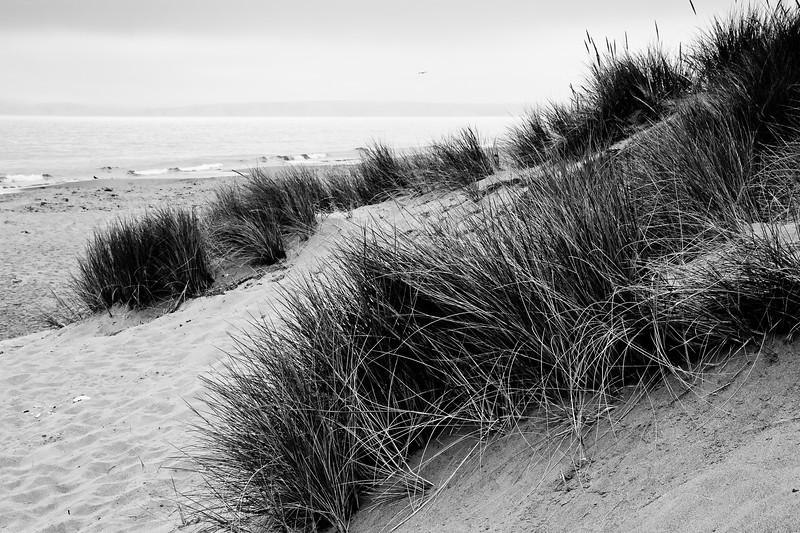 Beach grasses at Limantour Beach.