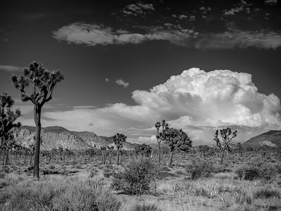 SummerClouds2014-1110-Edit-Edit