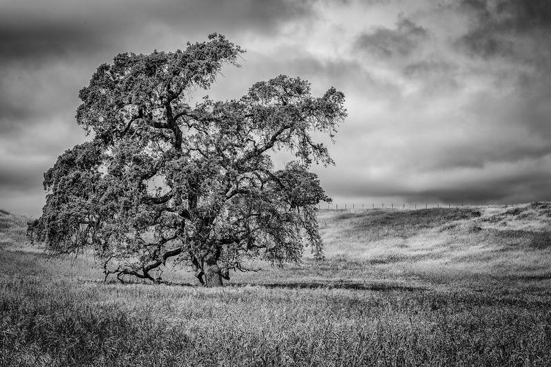 CentralCalifornia2015-0640-Edit