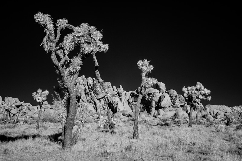 JoshuaTreeIR-009