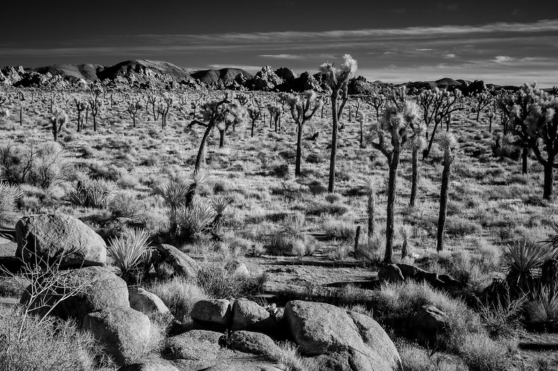 JoshuaTreeIR-022