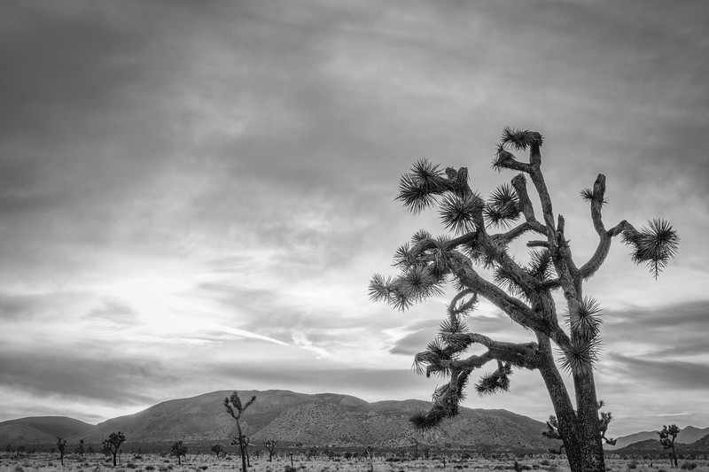 JoshuaTree2016-120-Edit