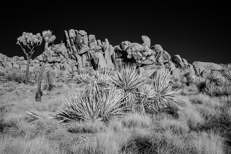 JoshuaTreeIR-006