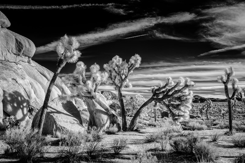 JoshuaTree2016-004-Edit