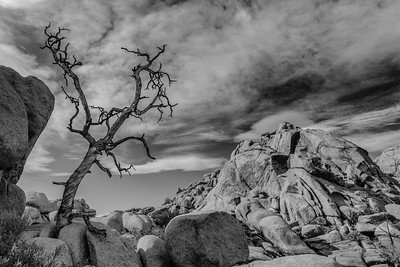 JoshuaTree2009-12-Edit