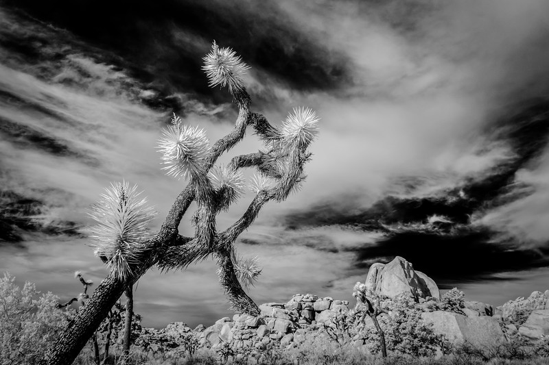 JoshuaTree2016-065-Edit