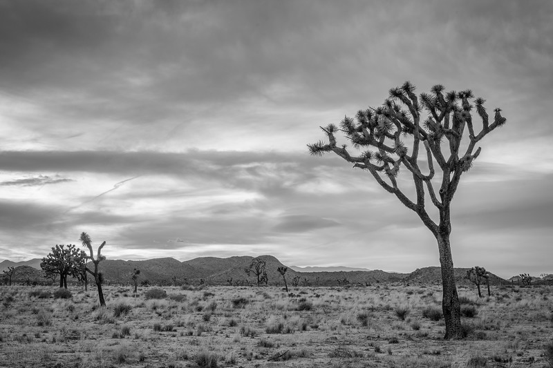 JoshuaTree2016-122-Edit