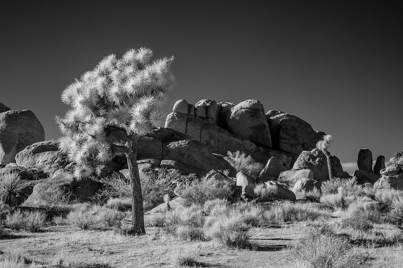 JoshuaTreeIR-011