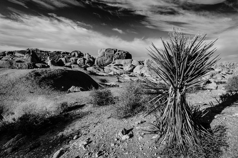 JoshuaTree2016-087-Edit