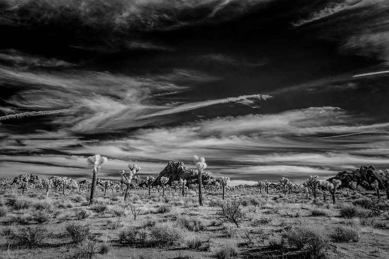 JoshuaTree2016-001-Edit